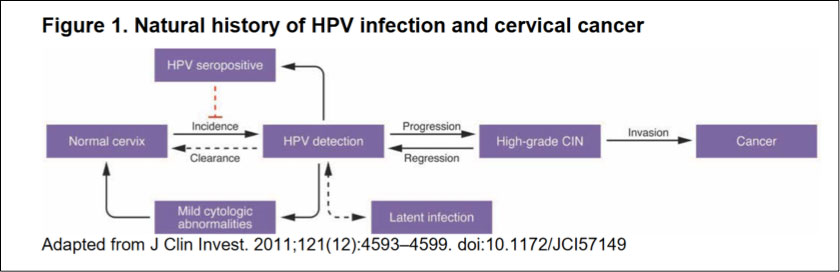 history of hpv